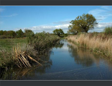 BLOG-DSC_8943-canal et chêne des plaines