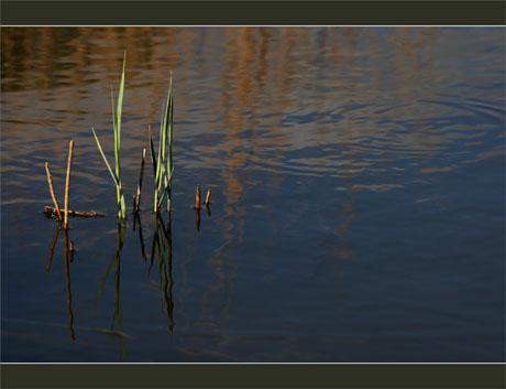 BLOG-DSC_8983-roseaux pont de bois des plaines