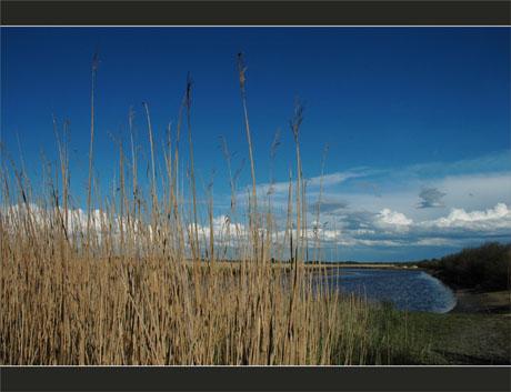 BLOG-DSC_9060-roseaux, Leyre, nuages