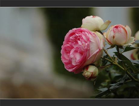 BLOG-DSC_9614-rosier maison volets bleus