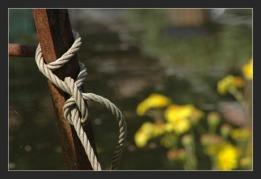 BLOG-DSC_0047-fleurs échelle et corde