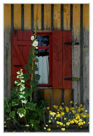 BLOG-DSC_3000-volet rouge, rose trémière et fleurs jaunes Le Canon