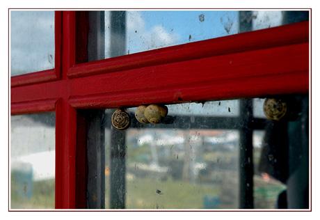 BLOG-DSC_7945-escargots & reflets fenêtre rouge