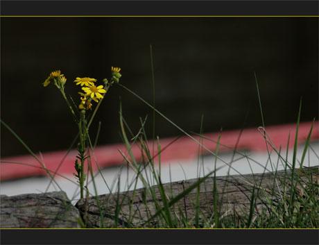 BLOG-DSC_0083-quai fleuri port des tuiles