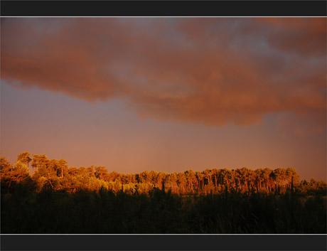 BLOG-DSC_0130-lumière forêt avant la pluie 2 Juillet