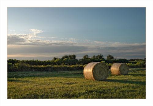 BLOG-DSC_0315-meules de foin domaine Fleury le Teich
