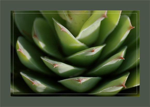 BLOG-DSC_0361-feuilles joubarbe artichaut murailles