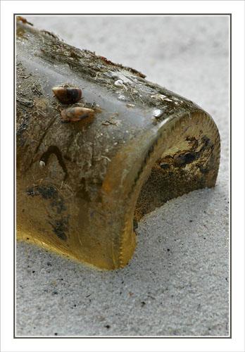 BLOG-DSC_0592-cul bouteille blanc des cabanes