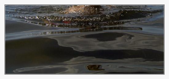 BLOG-IMG_1367-portrait aquatique