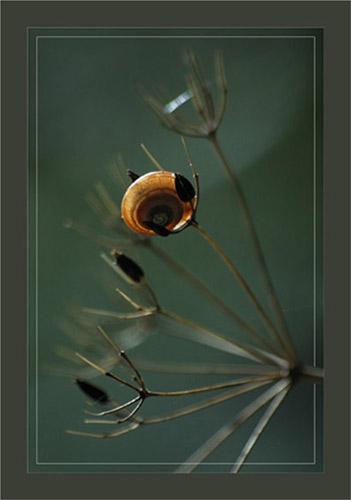 BLOG-DSC_0685-escargot sur ombellifère sèche cadre