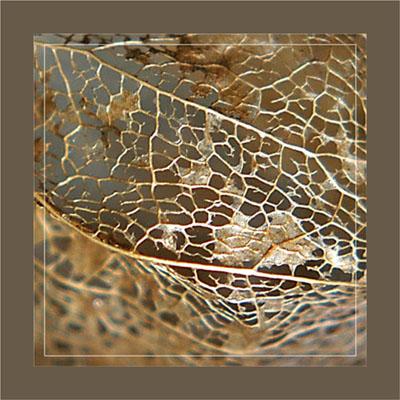 BLOG-DSC_1155-amour en cage dorée