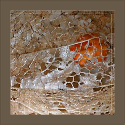 BLOG-DSC_1159-amour en cage dorée