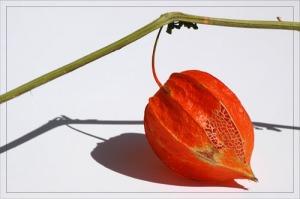 BLOG-DSC_1192-amour en cage orange et dentelle