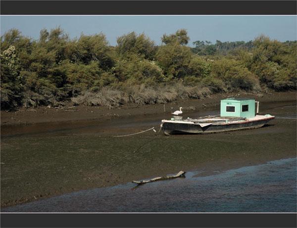 BLOG-DSC_1935-cygne et bateau chenal de Certes