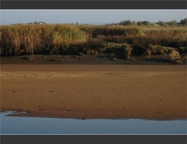 BLOG-DSC_2004-banc sable et roseaux Leyre