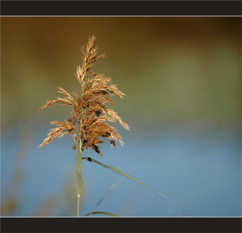 BLOG-DSC_2303-roseau et reflet cabane verte parc ornitho