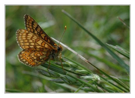 BLOG-DSC_9530-papillon