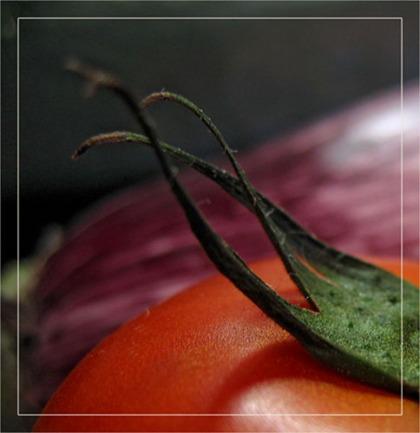 BLOG-IMG_1455-tomate et aubergine