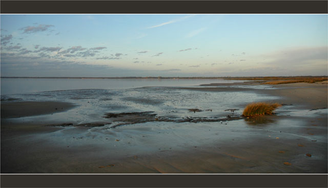 BLOG-DSC_2782-herbiers plage du Teich, face Audenge