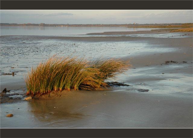 BLOG-DSC_2783-herbiers plage du Teich, face Audenge