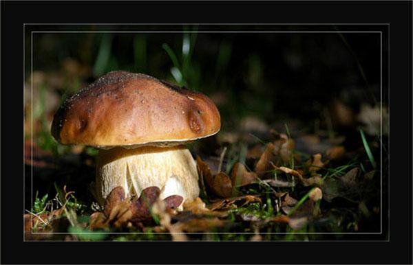 blog-dsc_5772-cepe-jardin 2008