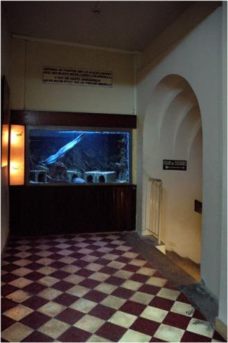BLOG-DSC_5561-accès aquarium musée Arcachon