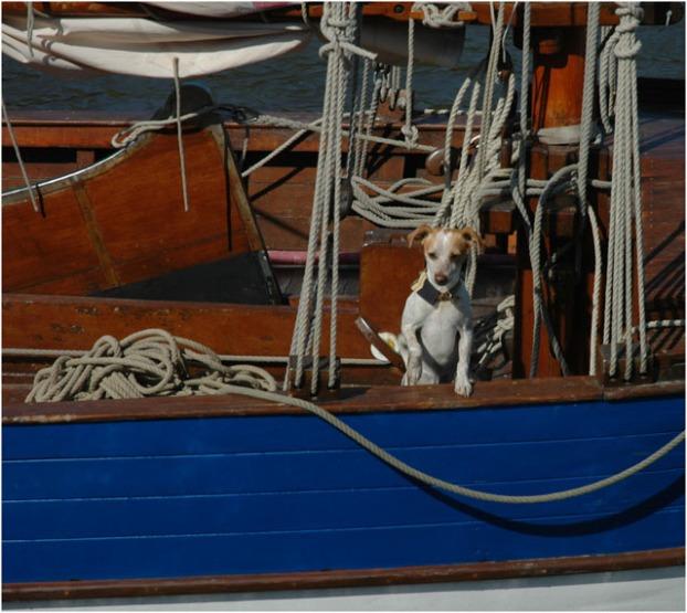 Les Copains à bord régate des maires 2010 le Teich