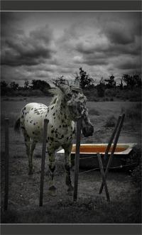 BLOG-DSC_8170-cheval barrière et baignoire abreuvoir