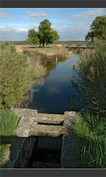BLOG-DSC_8962-plaines du Teich