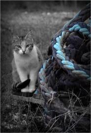 BLOG-DSC_01213-rec-chat Larros et cordages N&Bleu