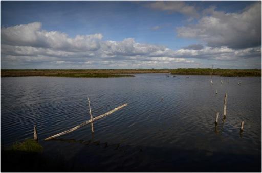 BLOG-DSC_04204-05-lagune parc ornitho le Teich