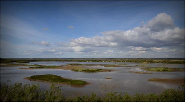 BLOG-DSC_04219-lagune Quancard parc ornitho le Teich