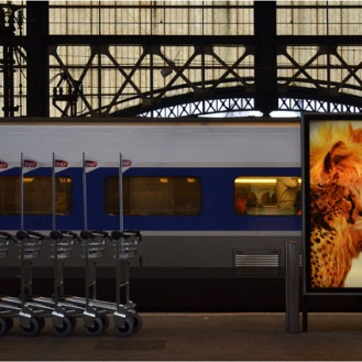 BLOG-DSC_10716-TGV et félins gare Bordeaux St Jean