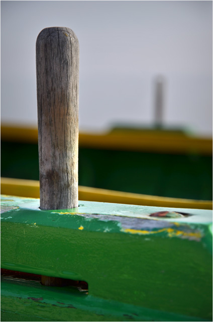 BLOG-DSC_11072-pinassotte Ferret Capie