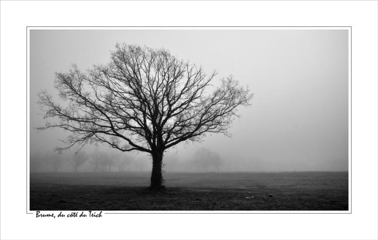 BLOG-DSC_13161-arbre dénudé et brume N&B cadre blanc