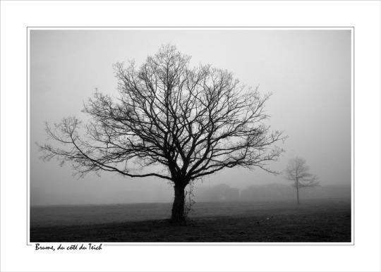 BLOG-DSC_13162-arbre dénudé et brume N&B cadre blanc