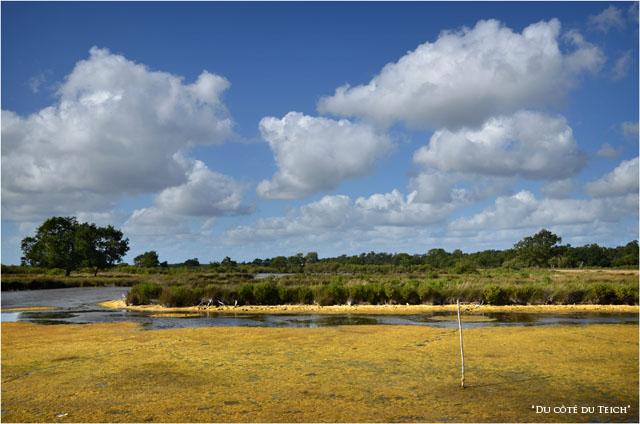 BLOG-DSC_16103-algues domaine Graveyron Audenge