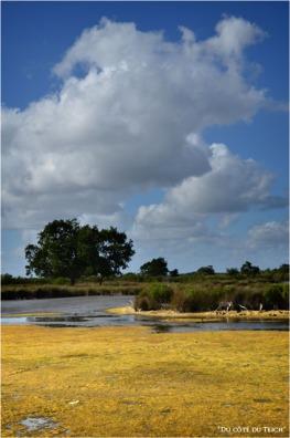 BLOG-DSC_16104-algues domaine Graveyron Audenge