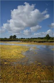 BLOG-DSC_16108-algues domaine Graveyron Audenge