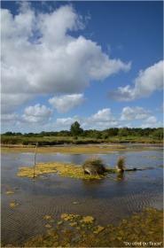 BLOG-DSC_16110-algues domaine Graveyron Audenge