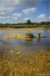 BLOG-DSC_16111-algues domaine Graveyron Audenge