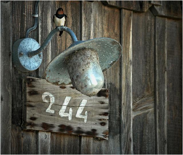 en savoir + sur l'association cabane 244