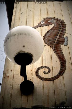 BLOG-DSC_17133-hippocampe et globe musée aquarium Arcachon