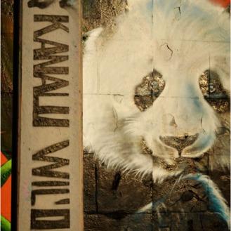 BLOG-DSC_18281-22 Kanalu Will'oo et tag panda Bacalan
