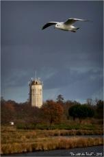 BLOG-DSC_18691-mouette et château d'eau Audenge
