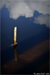 BLOG-DSC_19517-réserve ornitho le Teich