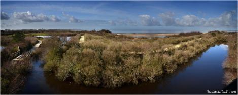 BLOG-DSC_19528-30-nord-ouest réserve ornitho le Teich, sentier du littoral et Bassin Arcachon