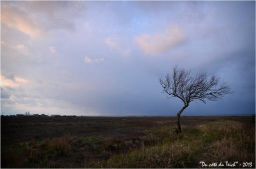 BLOG-DSC_19766-arbre dénudé crépuscule Gujan Meyran