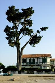 CP-DSC_1409-arbre & maison