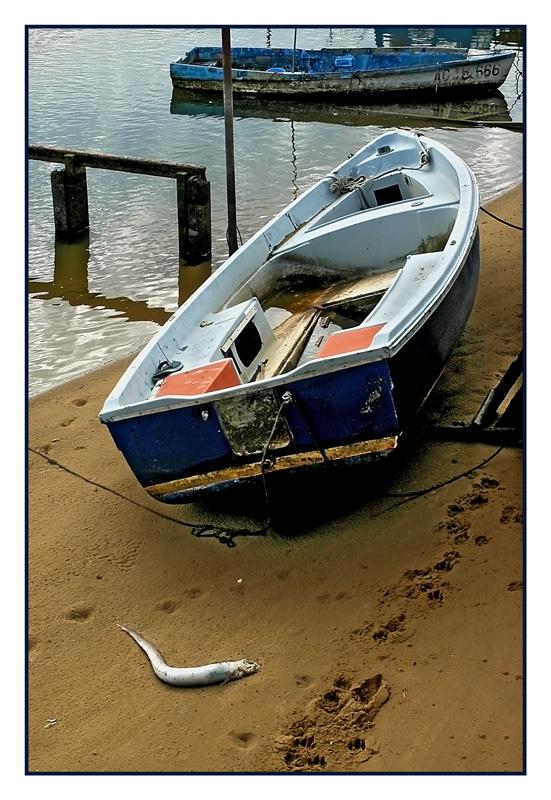 CP-DSC_2317-barques & poisson
